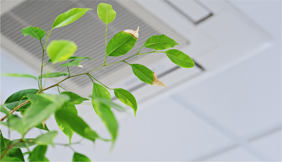 plant improving the indoor air quality of a room